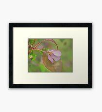 Soft colours of Spring Framed Print