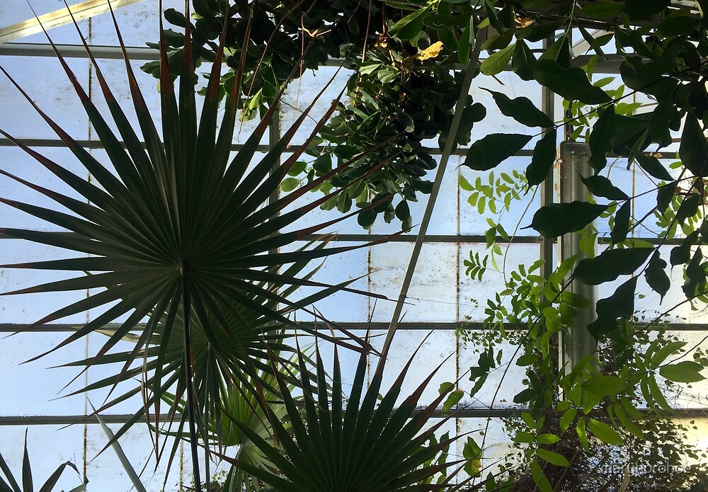 Greenhouse Ceiling by maryhorohoe