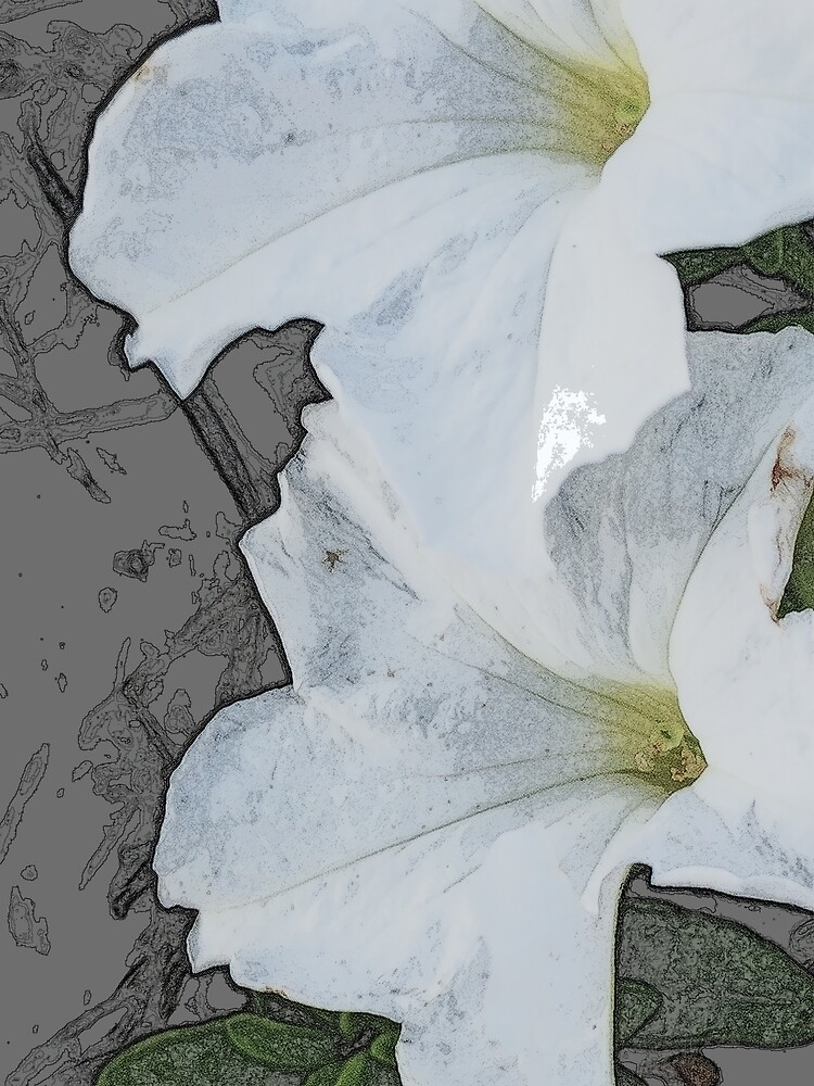Lilies in Pencil by theveiledattic