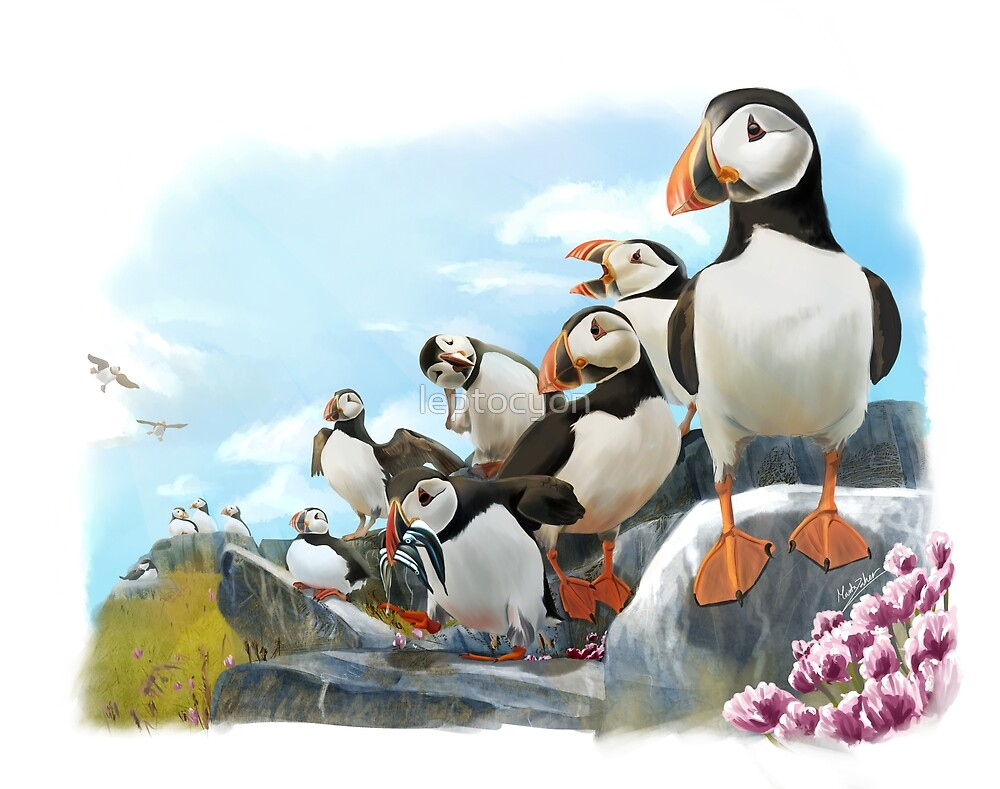 Puffins by leptocyon