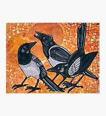 Three Magpies Photographic Print