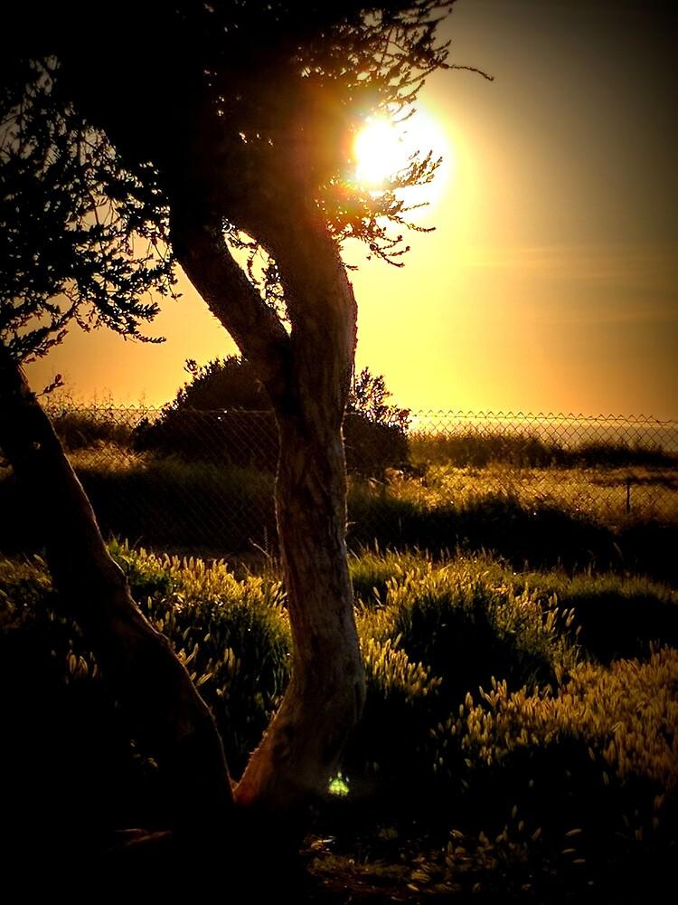 California Sunset Coastal Trees by theveiledattic