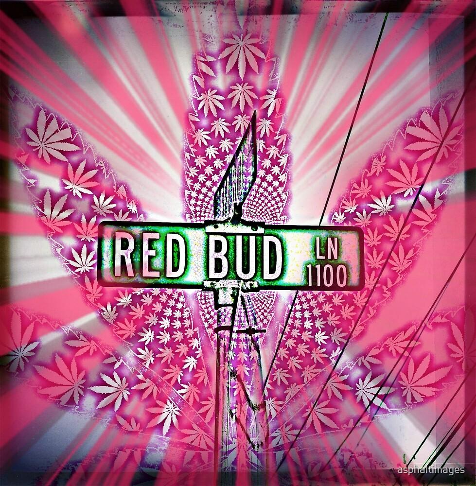 Red Bud Lane by asphaltimages