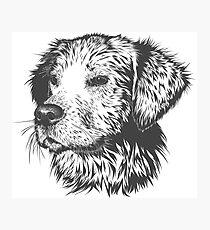 Majestic Dog Photographic Print