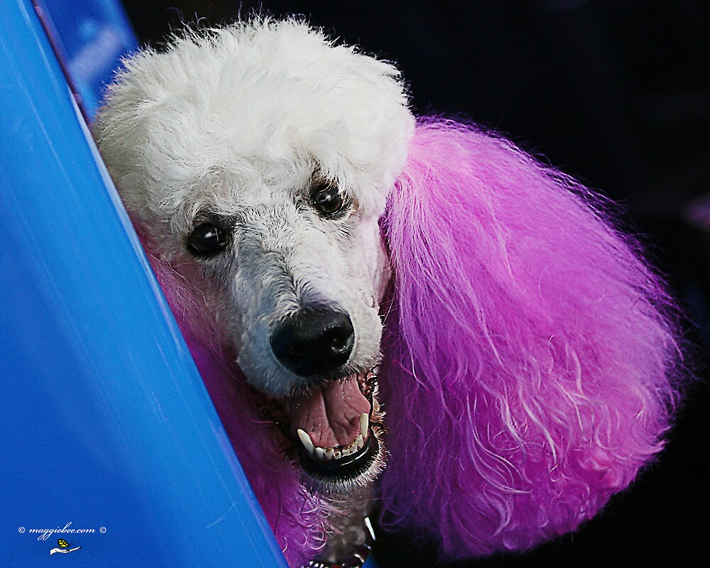 Pink Eared Poodle by Maggiebee