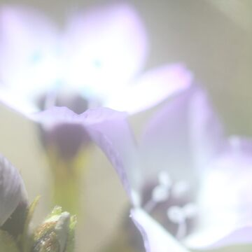 Flowers by RikaKatsu