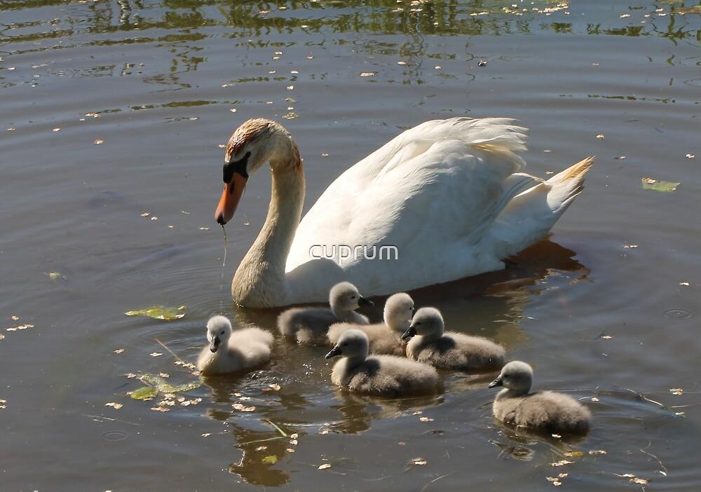 Proud Mom by cuprum