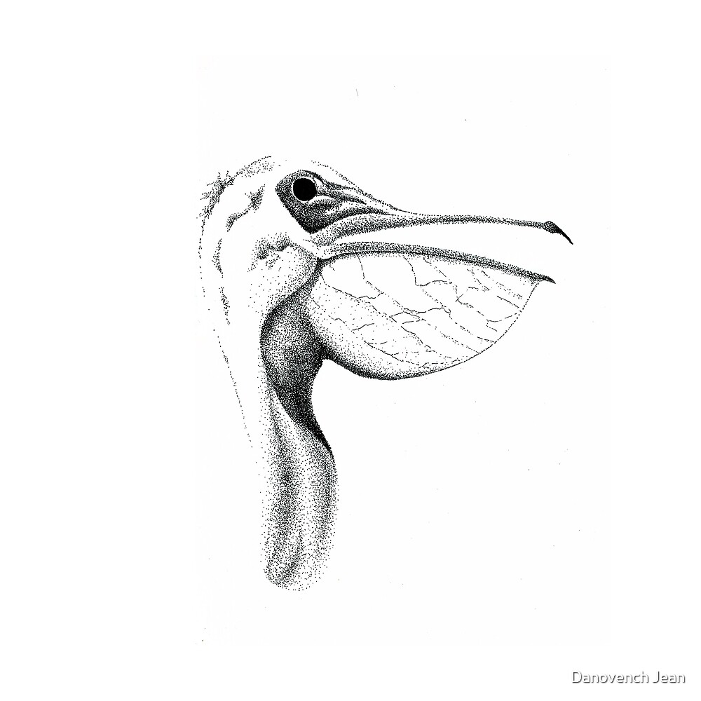 P is for Pelican by Danovench Jean