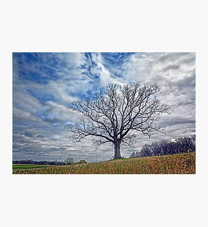 King of the Hill Photographic Print