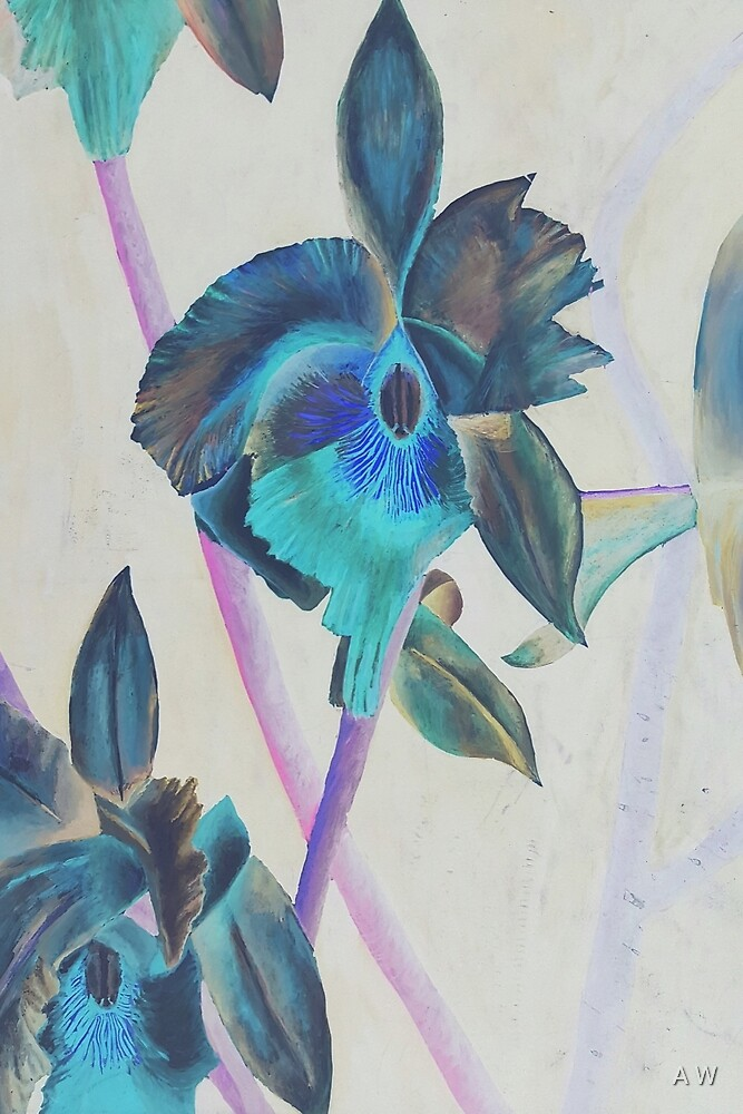 Blue Orchid by A W