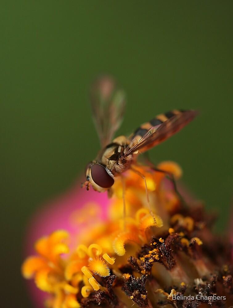 Flower Fly Fantasy by Belinda Chambers