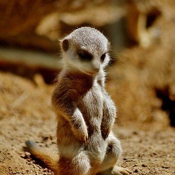 Meerkat Style by Ladymoose