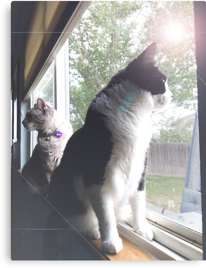 Cats in Window by ChessJess