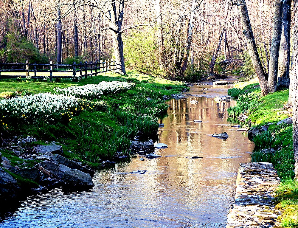 Peaceful stream by Judi Taylor