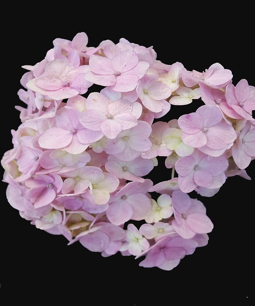 Light Pink Flowers by Rolando Calderon