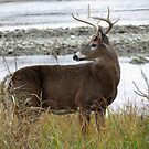 8 Point by the River by Veronica Schultz