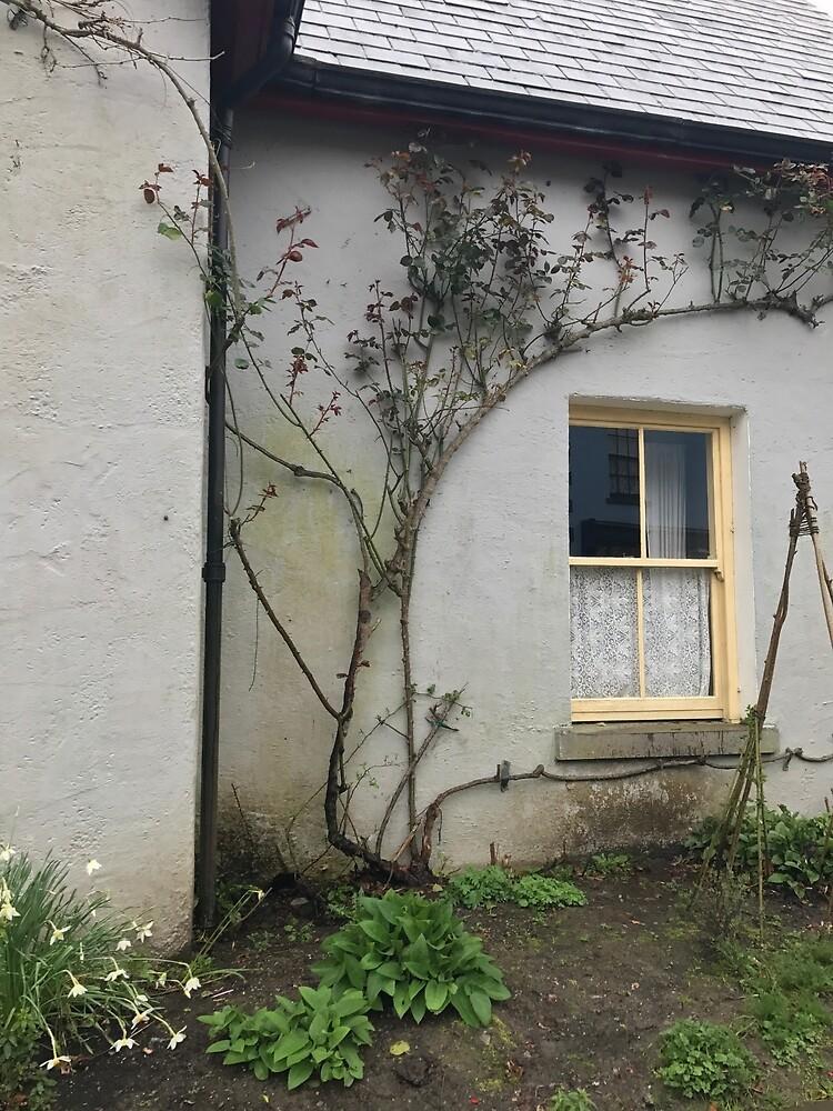 Irish window  by abach33
