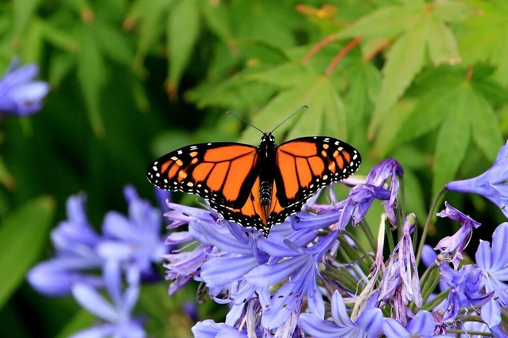 Monarch butterfly in garden by FranWest