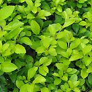 green leaf by flowerindattic