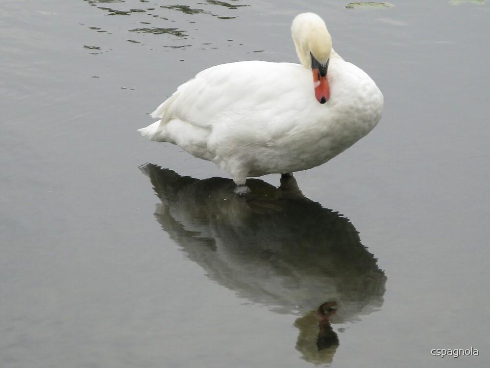 Swan by cspagnola