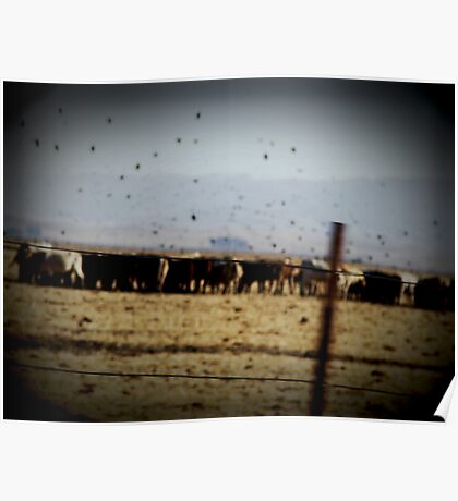 We Got Cows Poster