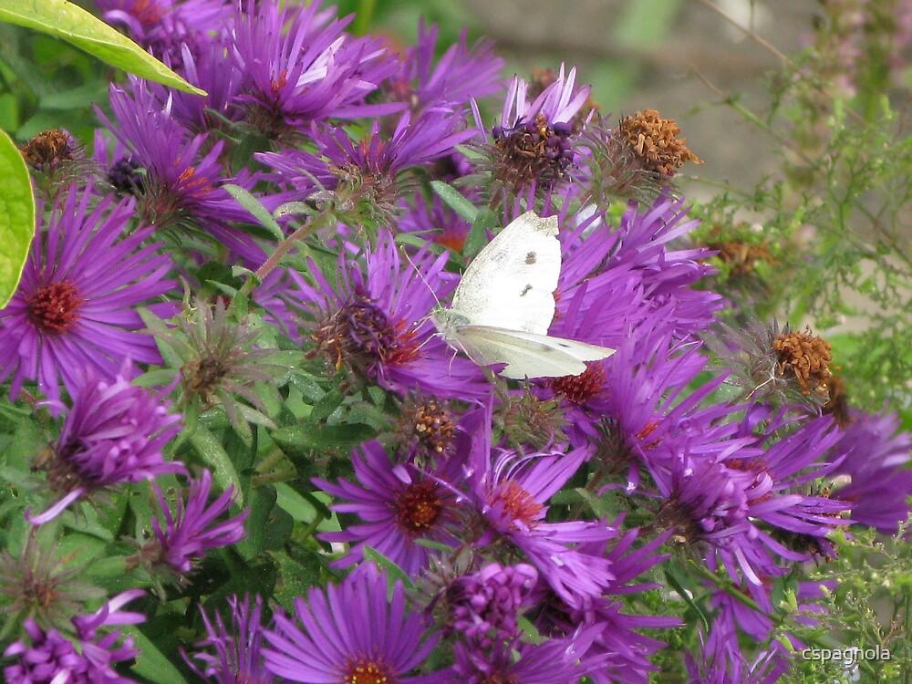 Purple flowers by cspagnola