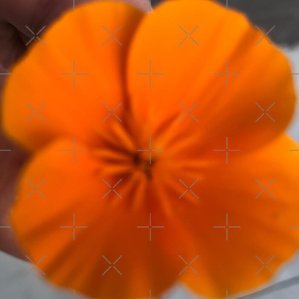 California Poppy by magartland