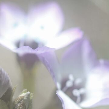 Flower 4 by RikaKatsu