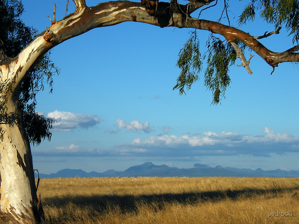 Warrumbungles From Wilber  by pedroski