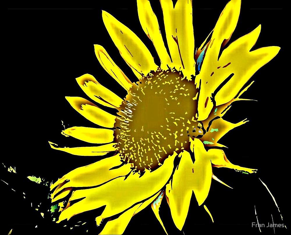 SUNFLOWER NOIR 2 by Fran James