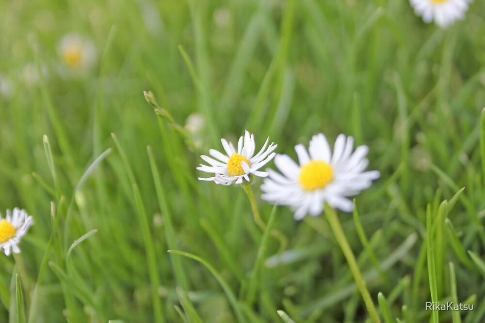 Flowers 5 by RikaKatsu