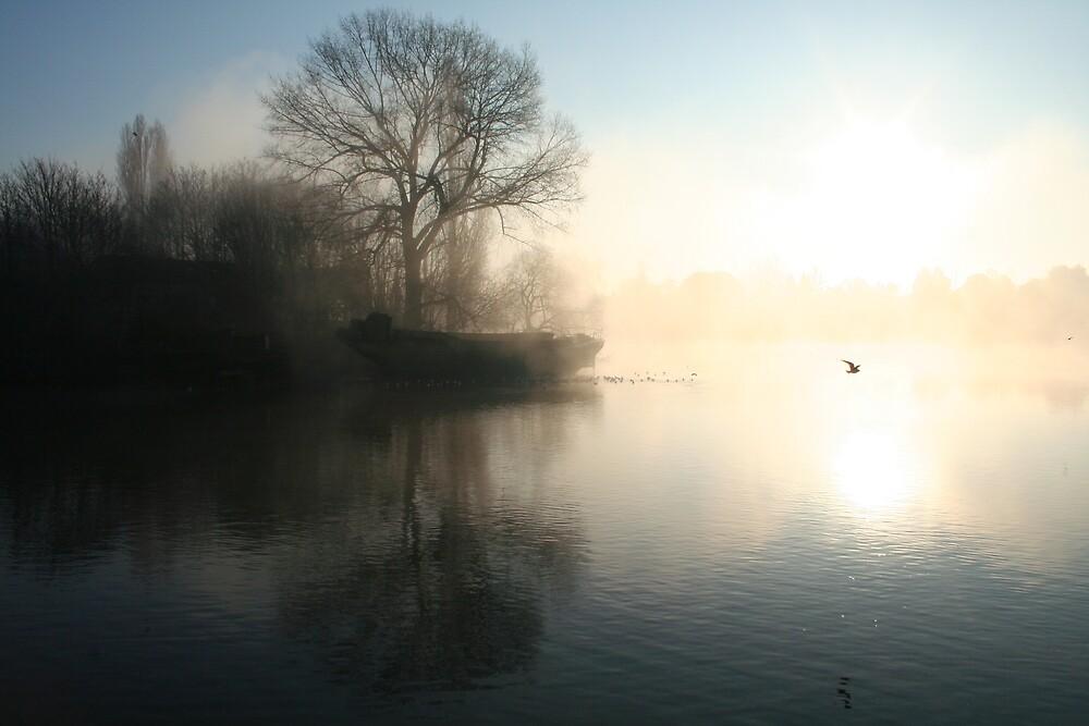 Misty Morning by SunburntTiger