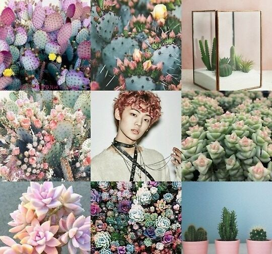 chan and cactus aesthetic by starsonmylegs