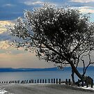crooked tree by carol brandt