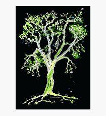Dancing in the Dark - Music Tree Photographic Print