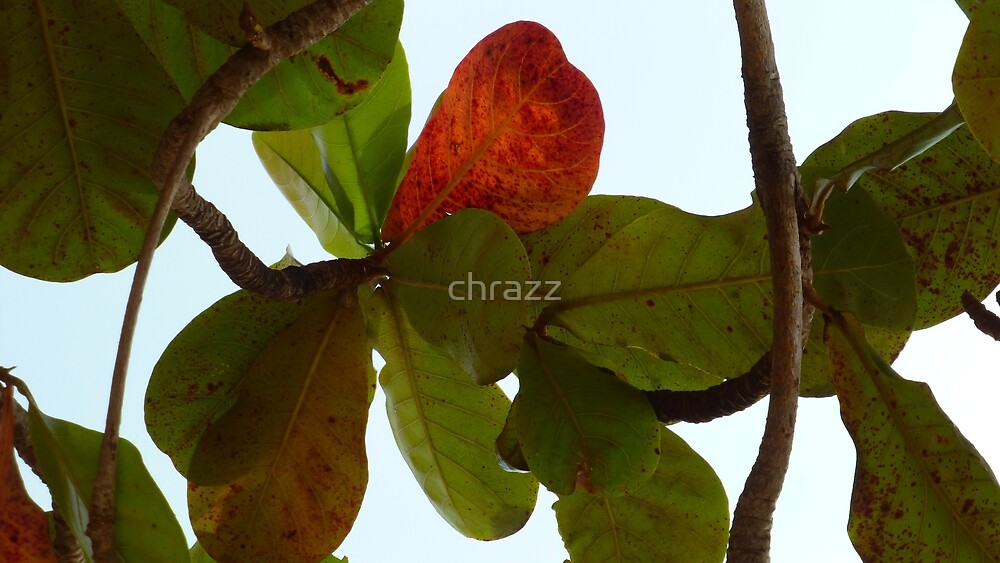 Autumn Leaves 3 by chrazz