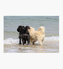 Two dogs at beach Photographic Print