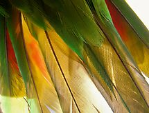 feathers 2 by Peta Hurley-Hill