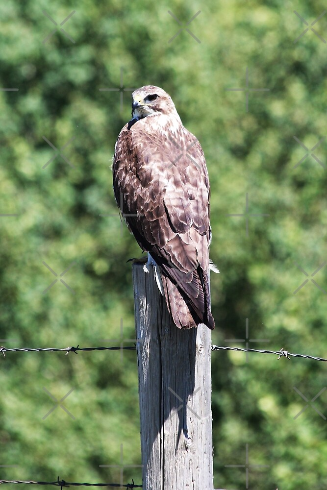 Sitting on the Fence Post by Alyce Taylor