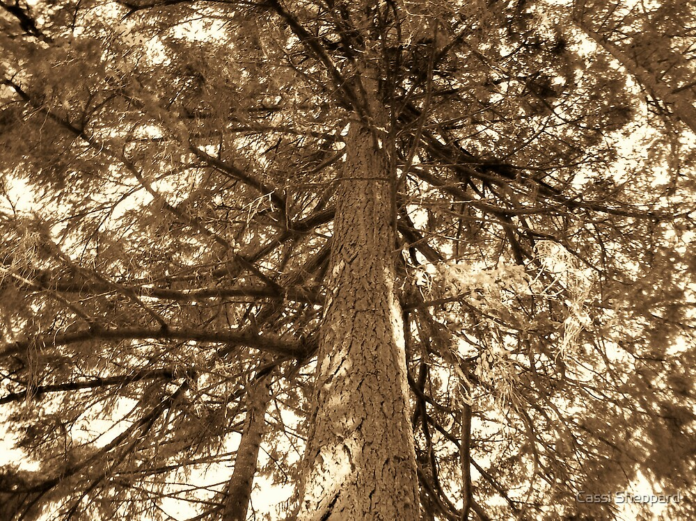 Sepia Tree by Cassi Sheppard