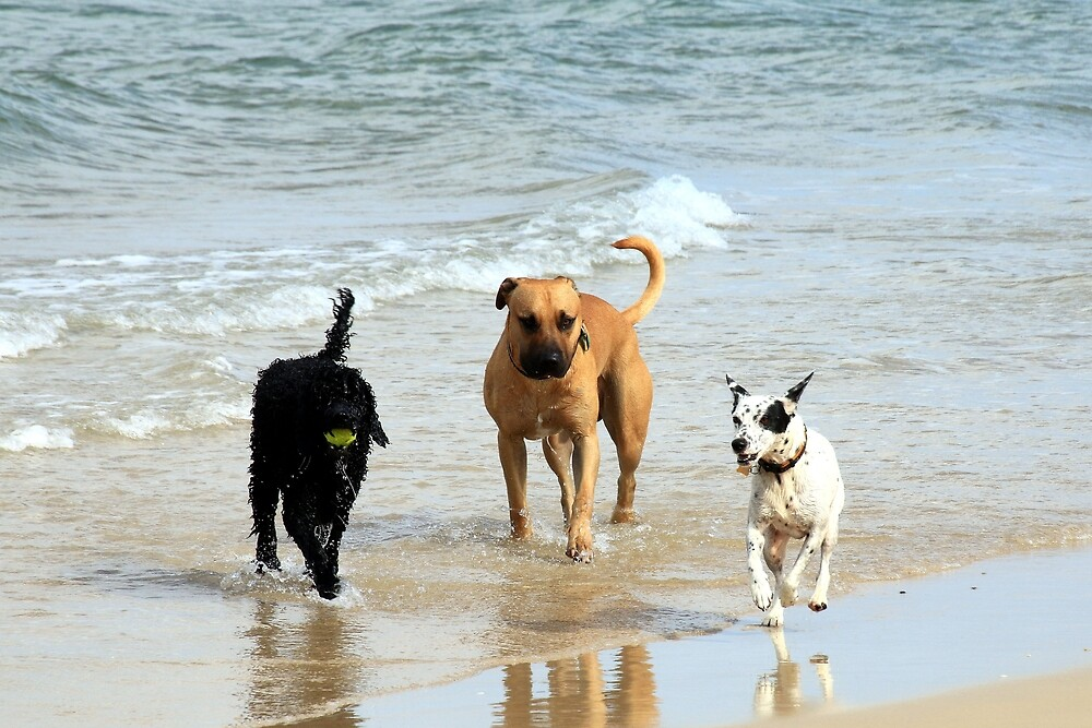 Three dogs at beach by FranWest
