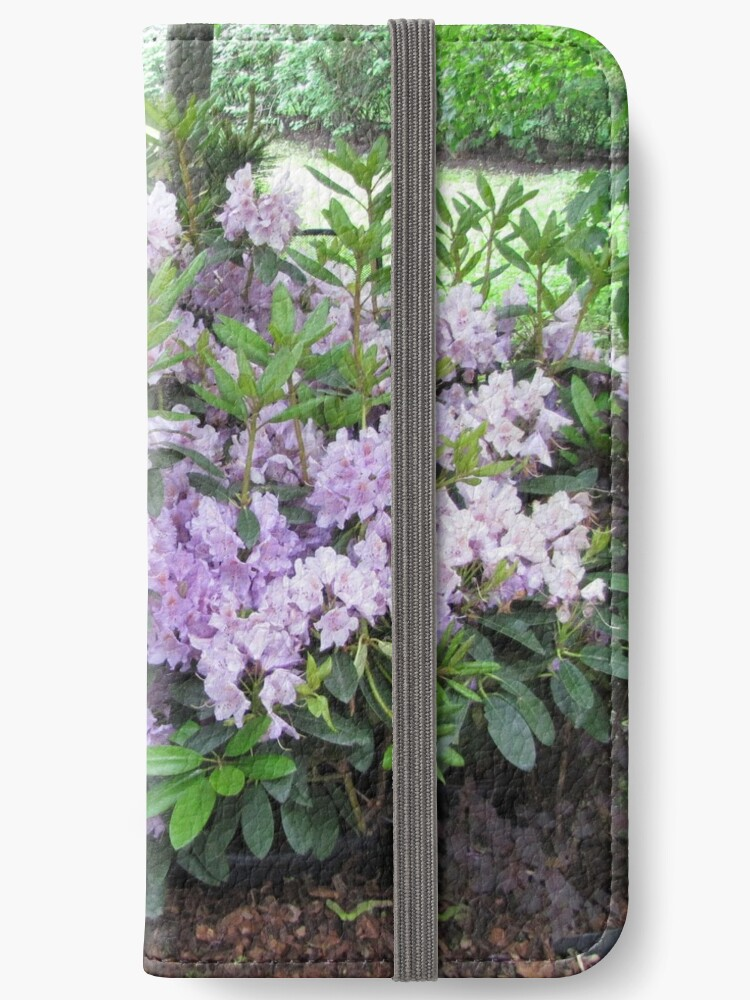 lilac rhododendron by designer437