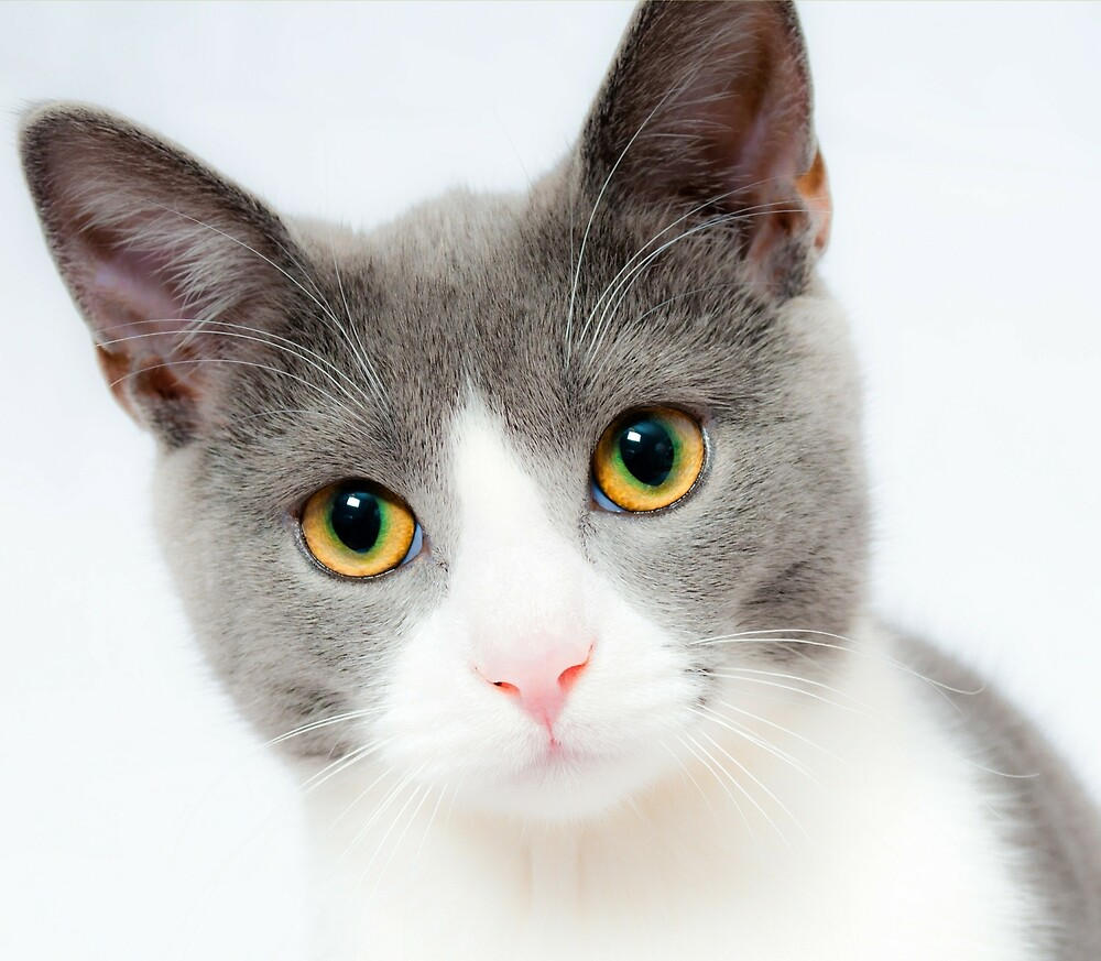 Beautiful Cat With Adorable Eyes  by superdazzle