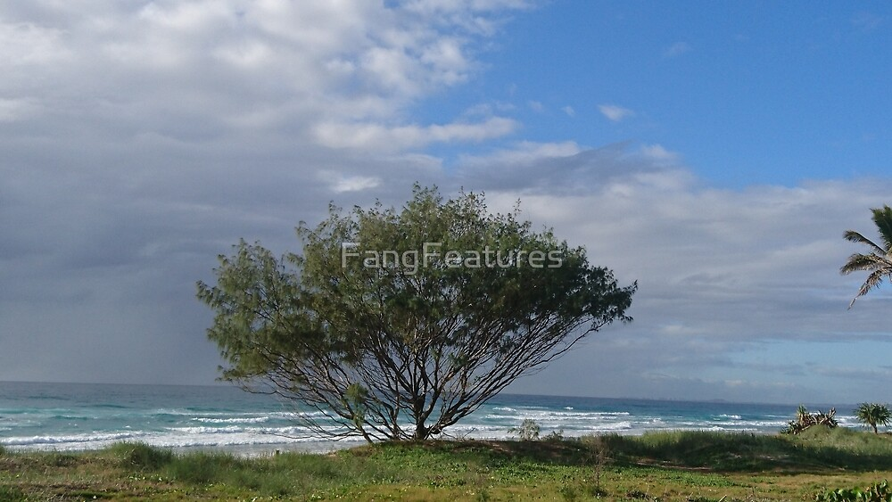 Beach tree. by FangFeatures