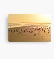 Seagulls on the shore Canvas Print