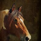 """Kindness"" - Portrait of a Therapy Horse by Bine"