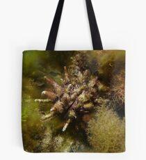 Sea urchin (Goniocidaris tubaria) - Upper Spencer Gulf, South Australia Tote Bag