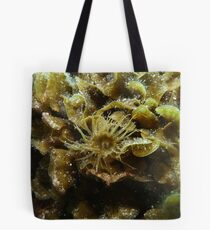 Anemone among the bryozoans - Upper Spencer Gulf, South Australia Tote Bag