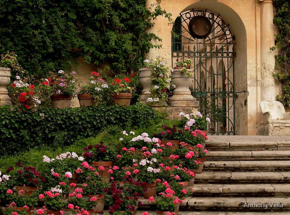 The President's Garden by Anthony Vella