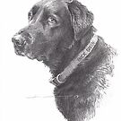 black labrador drawing by Mike Theuer